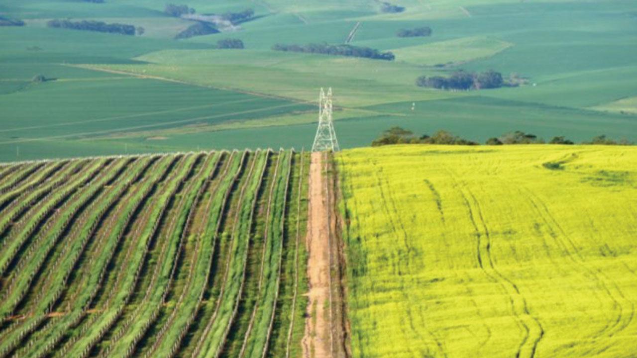 Ramaphosa misled the country on state custodianship of land