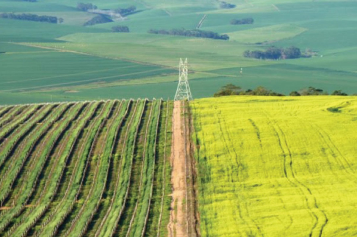 DA asks Cabinet to act in the national interest and oppose expropriation of land withoutcompensation