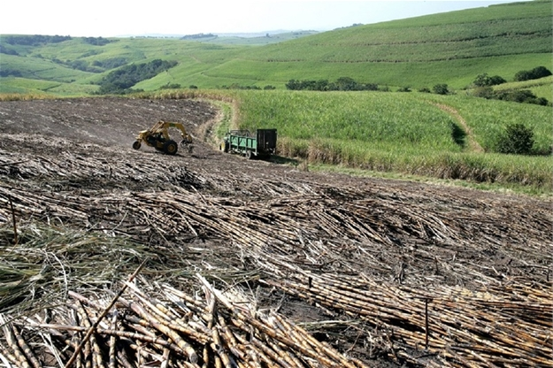 ANC confirms it has no interest in stemming job's blood bath in sugar industry