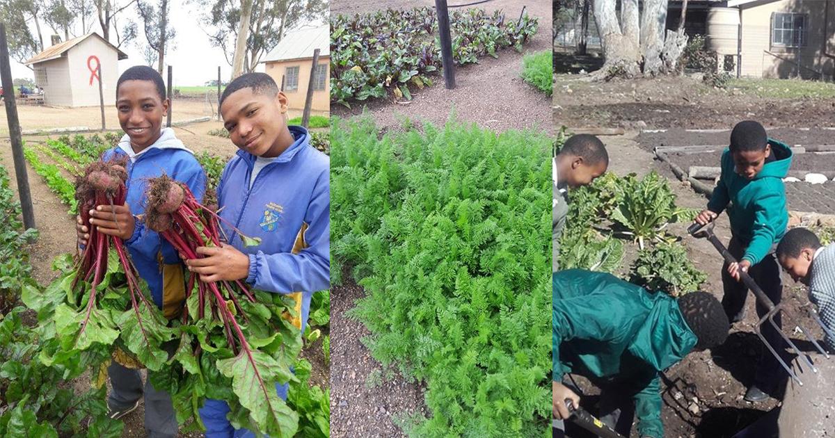 Growing Gardens at Rural Schools in Drakenstein Municipality