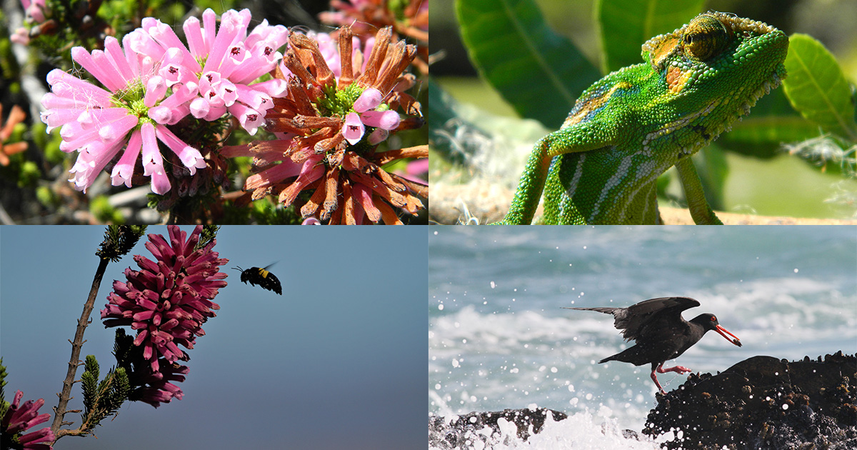 Cape Town's biodiversity steals the show in 2021 City Nature Challenge
