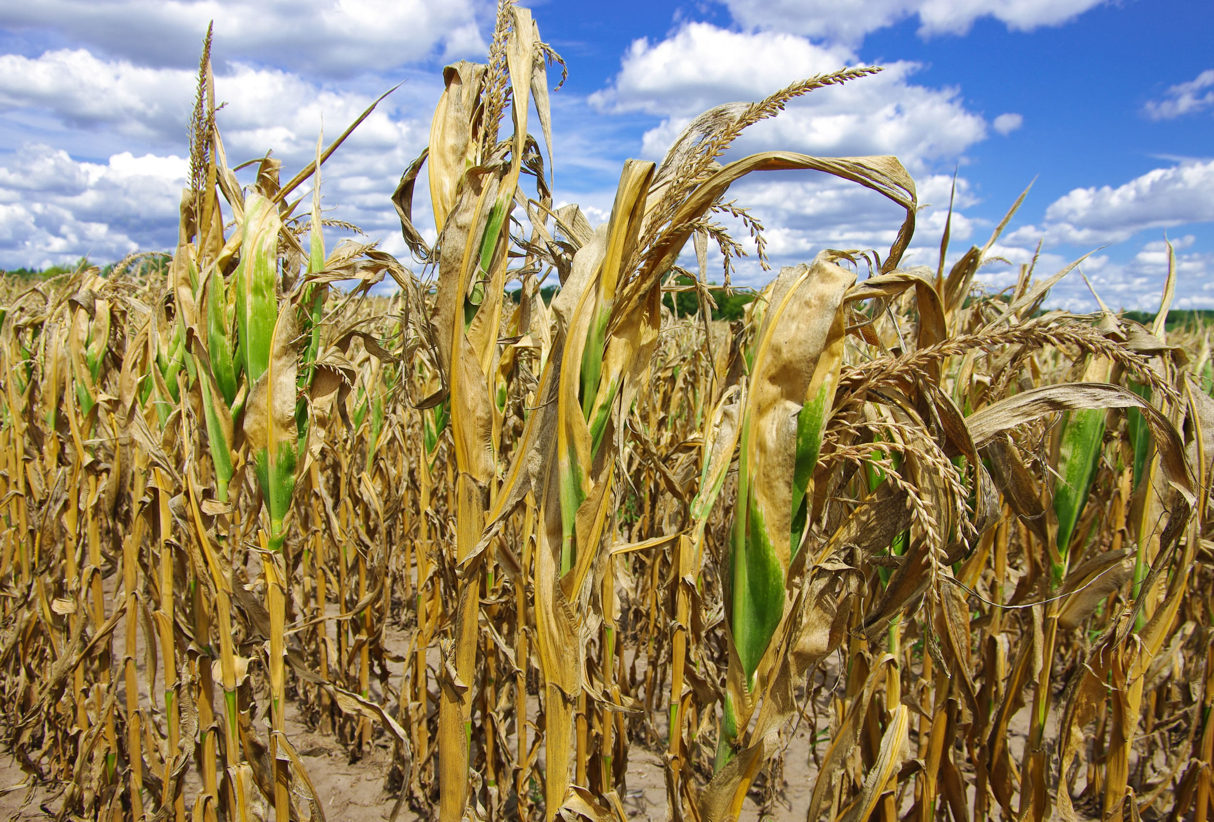 President Ramaphosa: Please help our Eastern Cape farmers