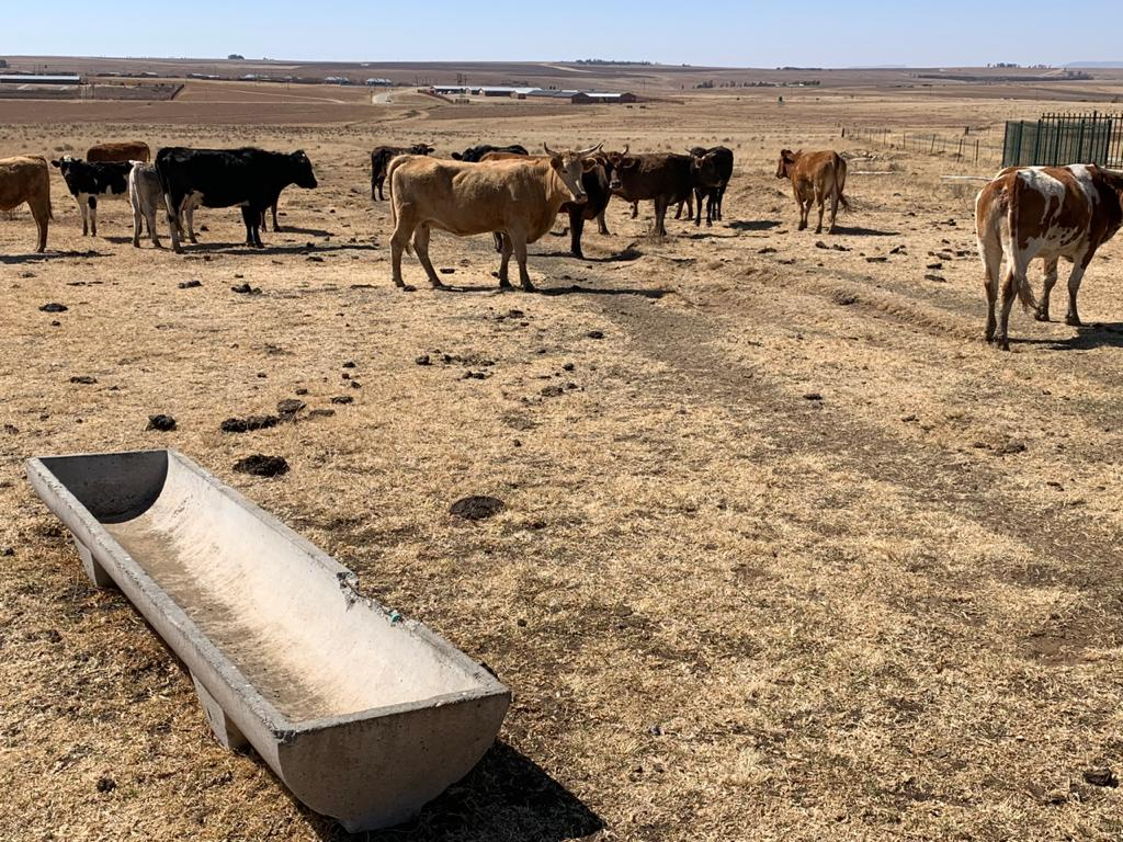 Free State Department of Agriculture leaves farmers financially barren with drought relief